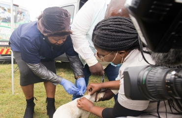 """No State Vehicles Hijackings until the Rabies virus spread is eliminated in uMlazi,"" declares Sithole-Moloi as eThekwini Metro Police enlists in the fight"